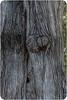 Black-Eyed Face Tree