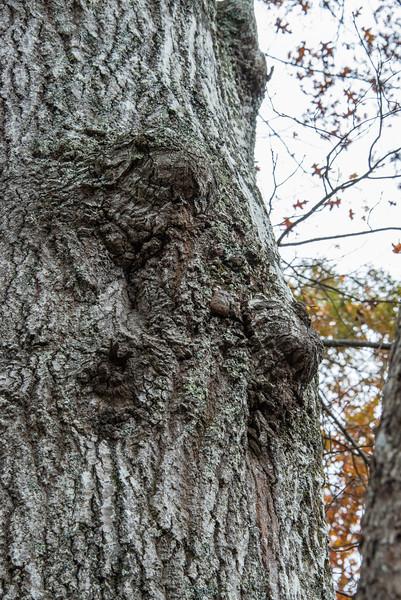 Wrinkled Face Tree