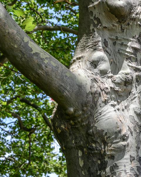 Funny Elephant Tree