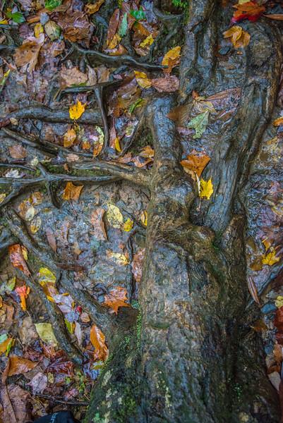 Chocolate rabbit Tree
