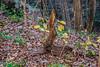 Python Tree