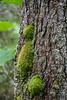 Green Tie Jacket Tree