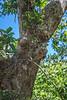 Woman's Silhouette Tree