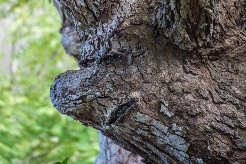Suspicious face Tree