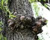 Sleeping Baby Bear Tree