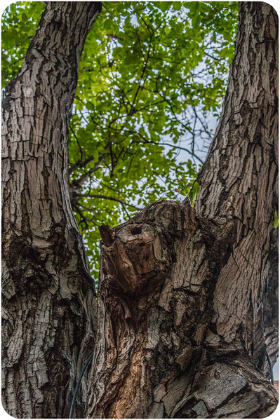 Bird with Long Wings Tree