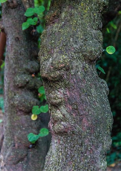 Sleeping face Tree