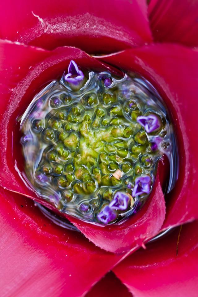 Bromeliad Bowl