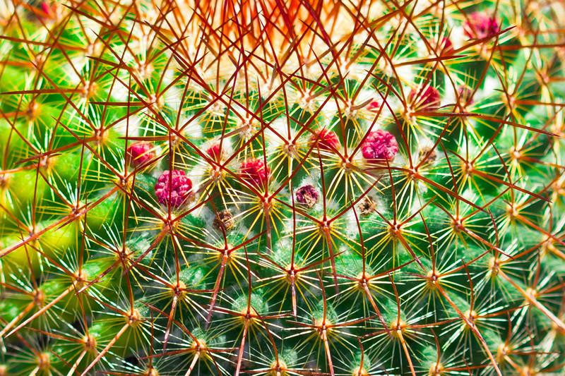 Cactus at Fairchild