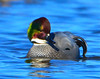 Falcated Duck 12:13:1215 _pp