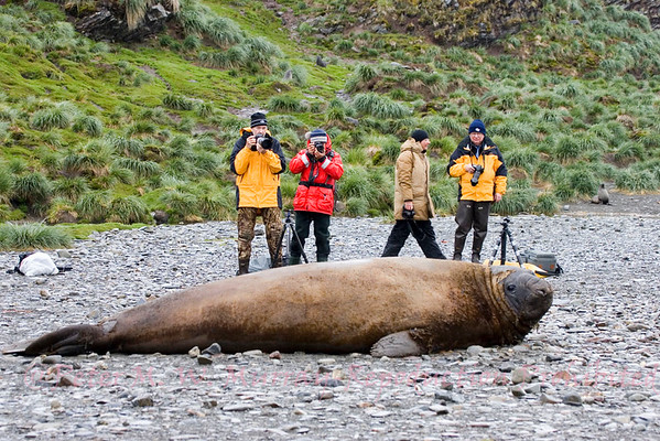 Falkland Islands, South Georgia, Antarctic Peninsula