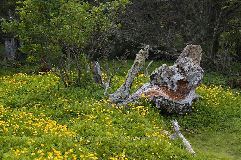 Vegetation, Tierra del Fuego National Park