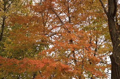 Fall 2004 leaves