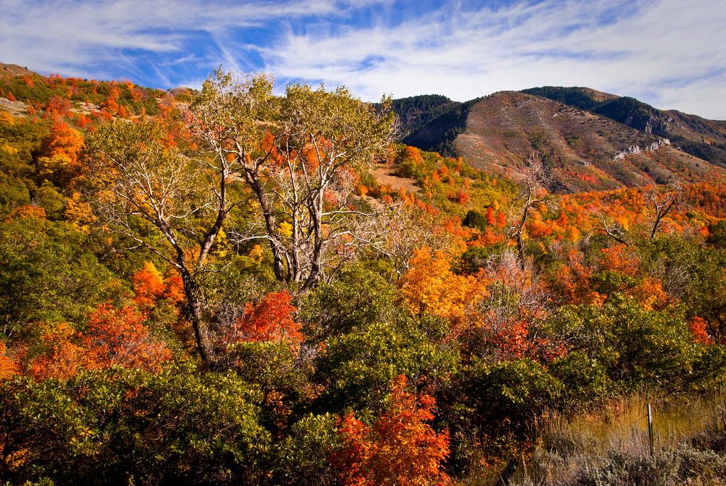 Payson Canyon, UT