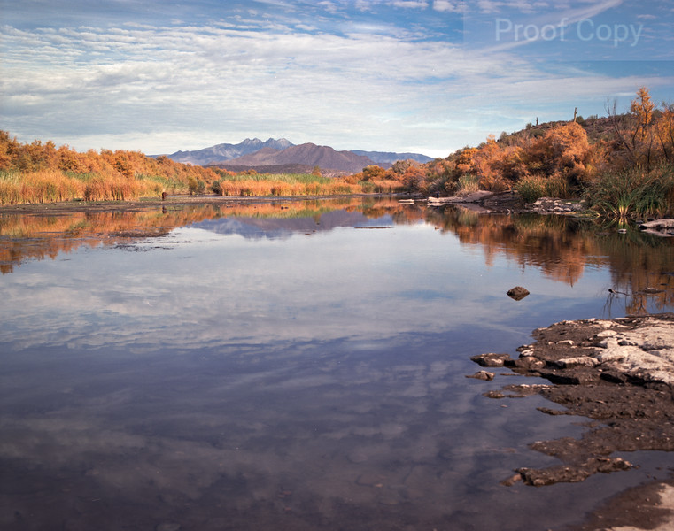 Salt River Fall Colors-Four Peaks On Horizon
