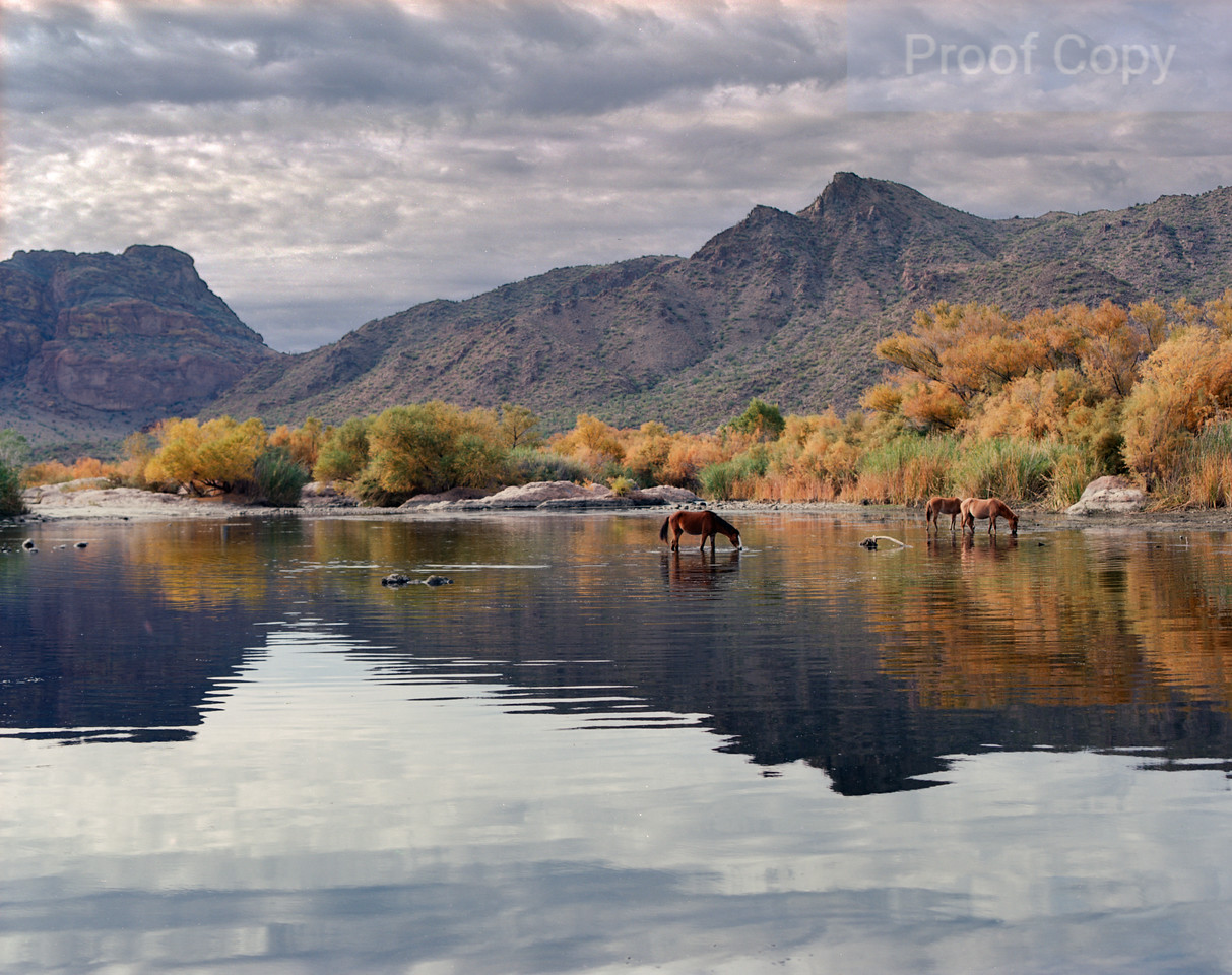 Salt River Wild Horses and Red Mountain-Fall 2016