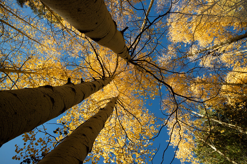 Aspens-Kachina Wilderness