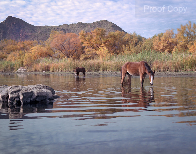 Salt River and Its  Wild Horses