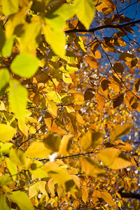 Fall Colors 06-015