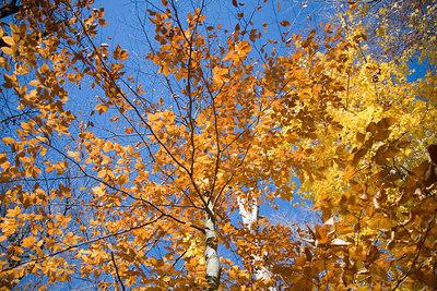 Fall Colors 06-003
