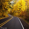 As the sun captures the golds of autumn along the North Santiam road near Mill City, Oregon