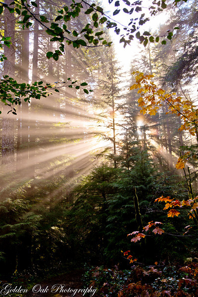 Add one misty forest, a little sunlight a photographer and here you are!