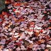 Fall leaves on the ground creating a pattern of color.
