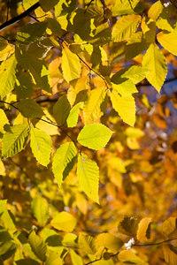 Fall Colors 06-014