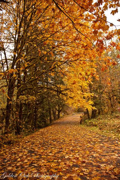 Follow the golden road!