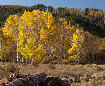 Fall Colors 2010