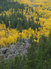 Fall colors along the Peak to Peak Highway, Colorado