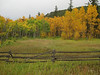 Fall colors north of Nederland, Colorado