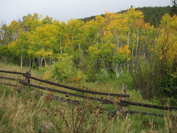 Fall colors north of Nederland, Colorado