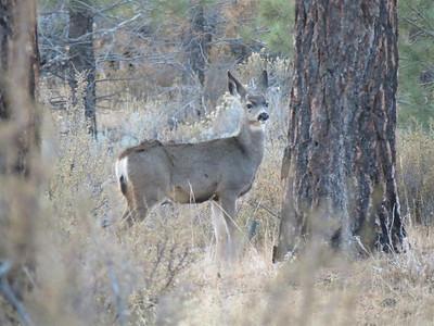 Deer at the northern end. - November 2, 2013