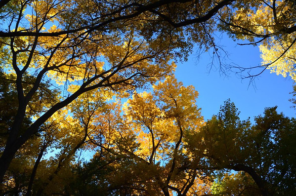 Fall Colors from Reno to Dayton