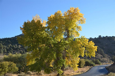 6 Mile Canyon Fall Colors - October 18, 2013