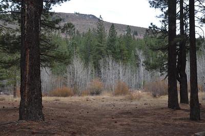 Bare aspen grove in Dog Valley - November 2, 2013