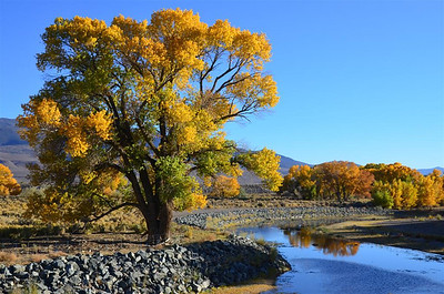 Along the Carson River North of Dayton, Nevada - October 19, 2013