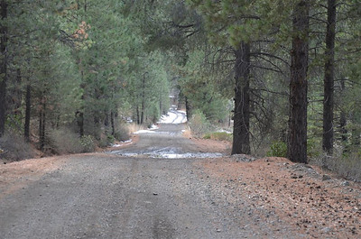 Forest Service Road 31010 in Dog Valley - November 2, 2013