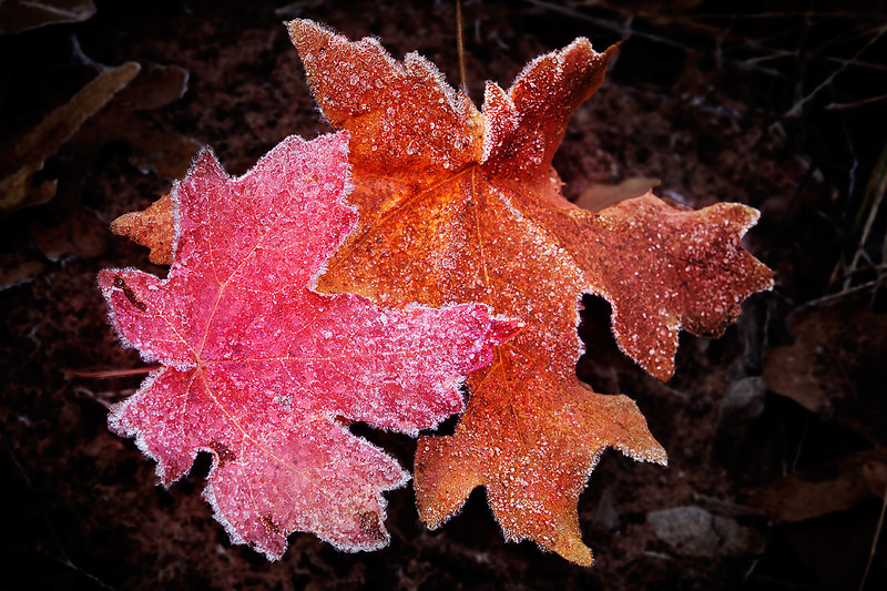 Frosted Fall Colors
