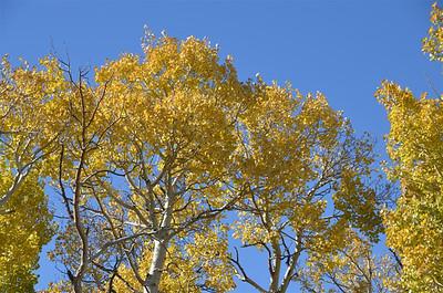 Fall Colors at Monitor Pass - October 4, 2013