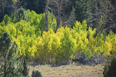 Fall Colors near Heenan Lake