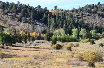 Fall Colors and a deer near Leviathan Peak