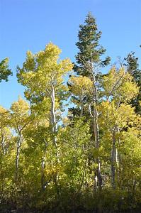 Fall colors at Monitor Pass