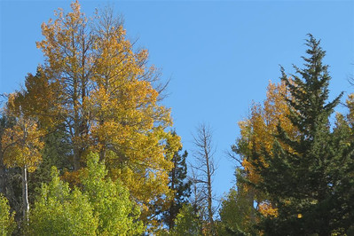 Fall Colors on Leviathan Peak