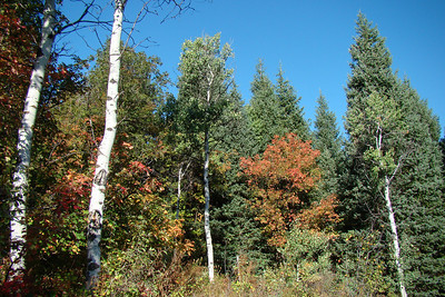 Wasatch Mountains Early Fall Maples