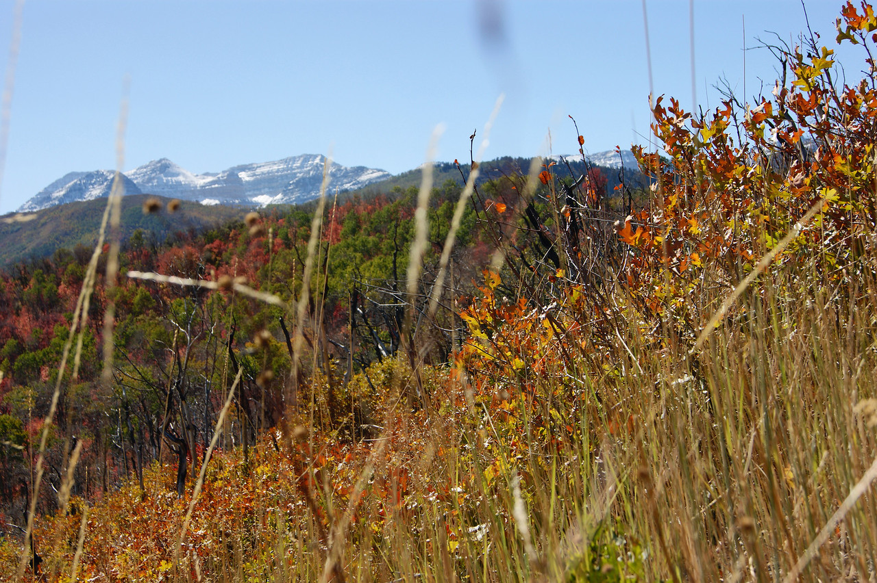 Gold to snow American Fork Canyon