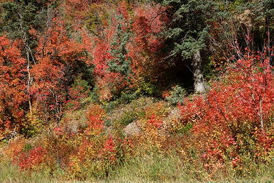 Color of Fall, American Fork Canyon, Utah