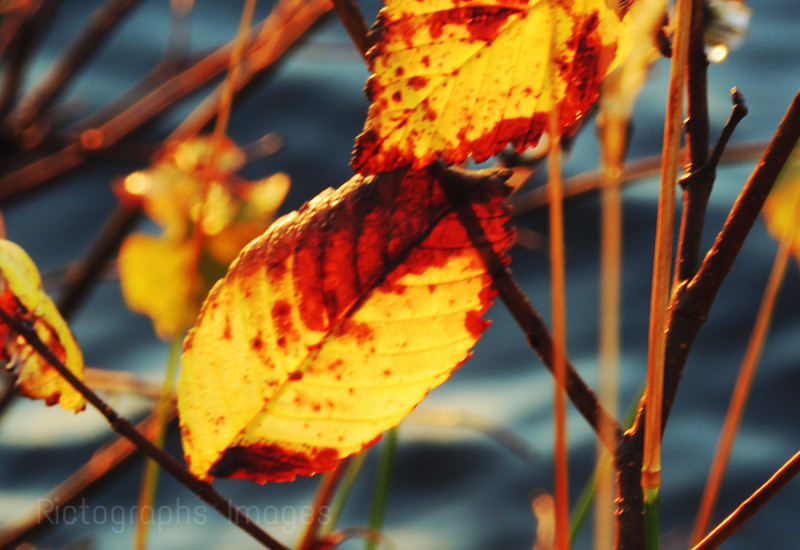 Changing Leaves; Ric Evoy