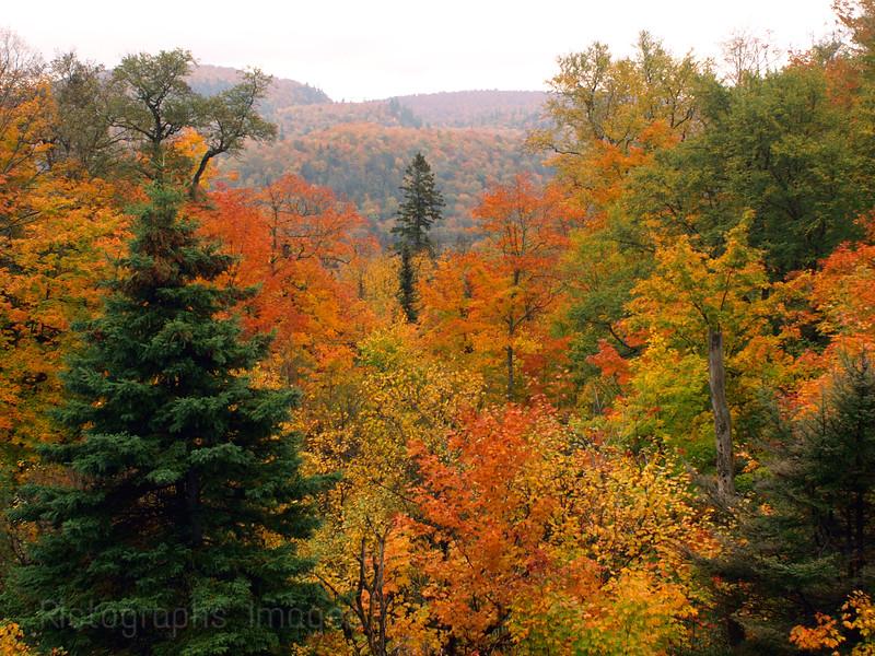 Autumn Leaves Autumn Leaves